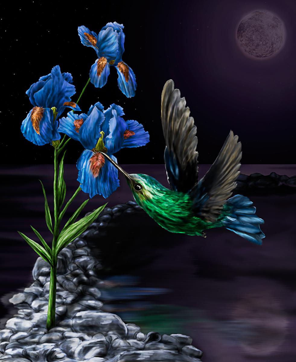 kolibri-finished