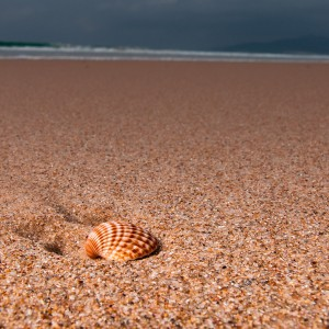 Golden-Beach